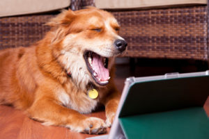 Tweeting Pets